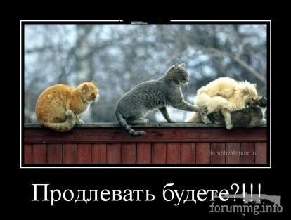 128925 - Смешные видео и фото с животными.