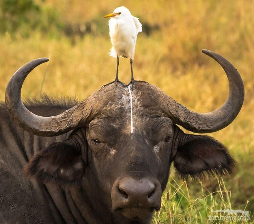 129024 - Смешные видео и фото с животными.