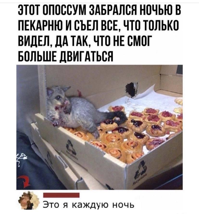 129048 - Смешные видео и фото с животными.