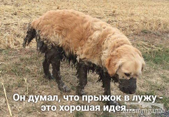 129050 - Смешные видео и фото с животными.