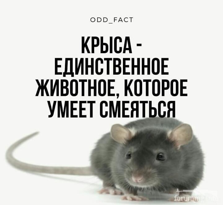 129085 - Смешные видео и фото с животными.