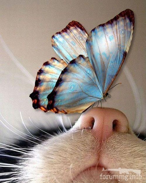 130577 - Красивые животные