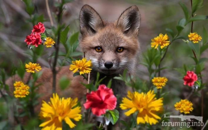130578 - Красивые животные