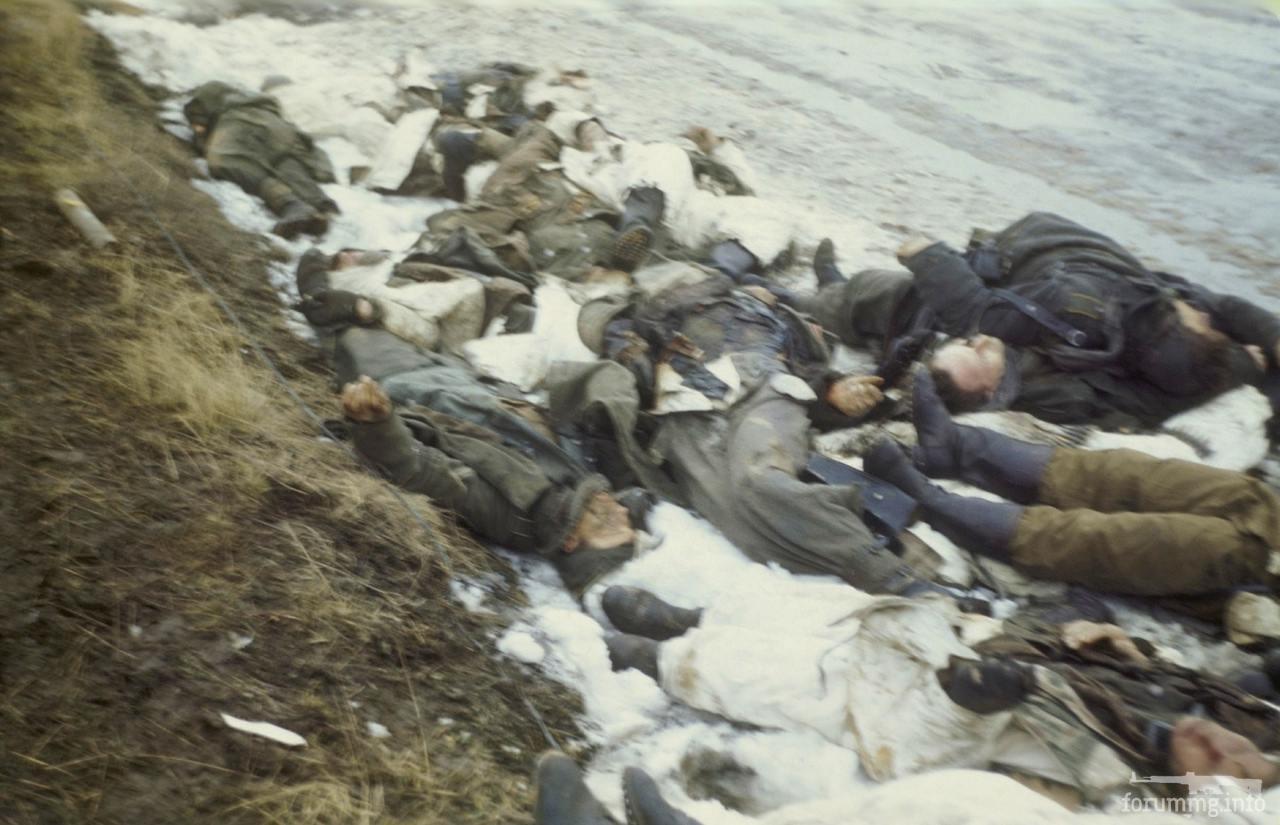 130767 - Тела погибших немецких солдат.
