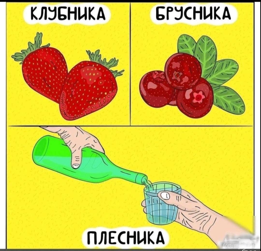 134015 - Пить или не пить? - пятничная алкогольная тема )))