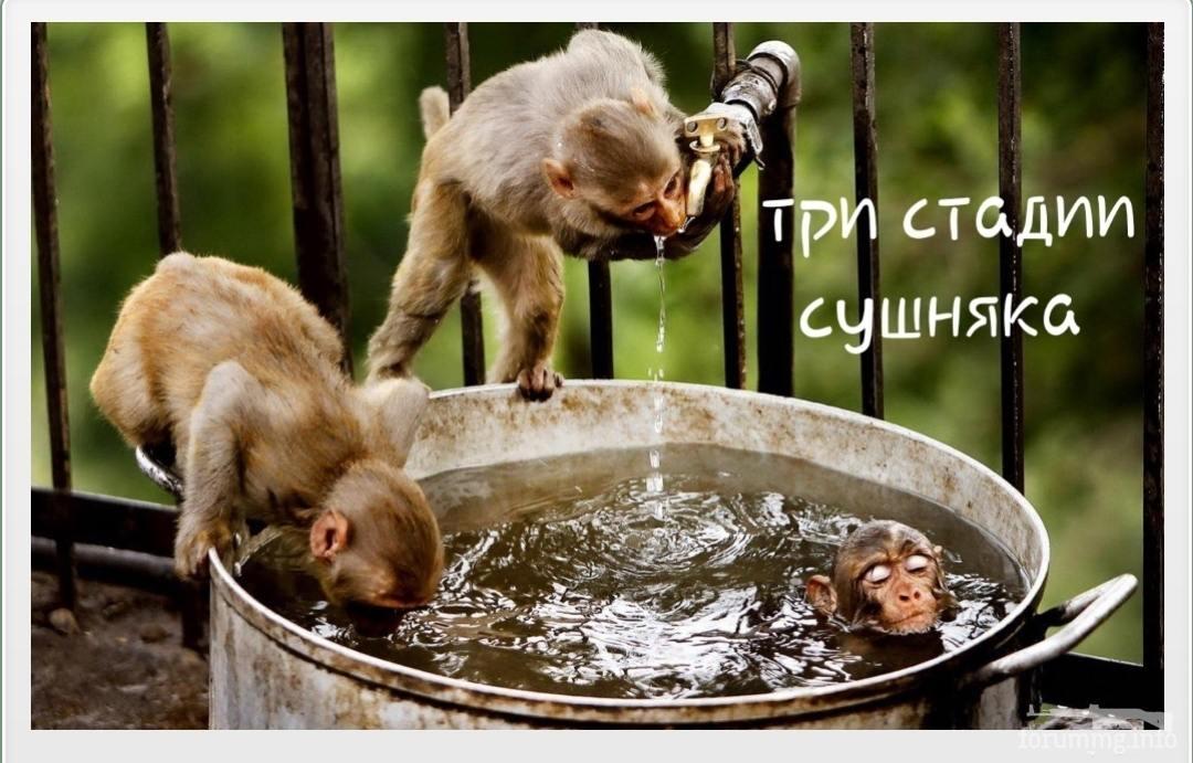134636 - Пить или не пить? - пятничная алкогольная тема )))