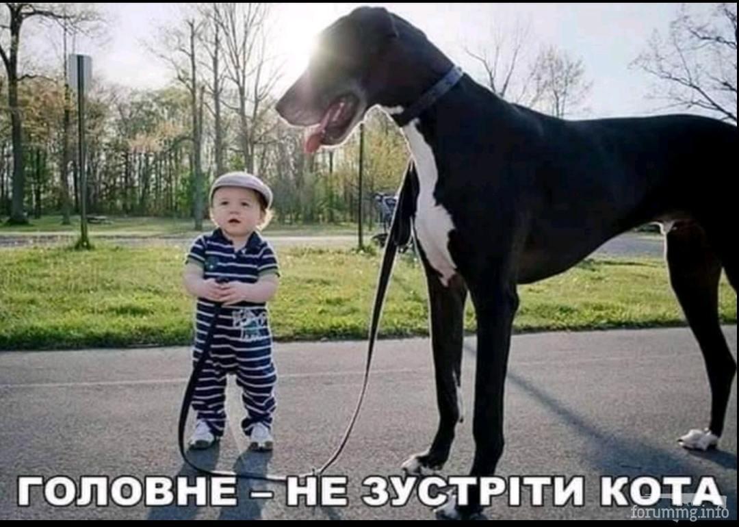 135755 - Смешные видео и фото с животными.