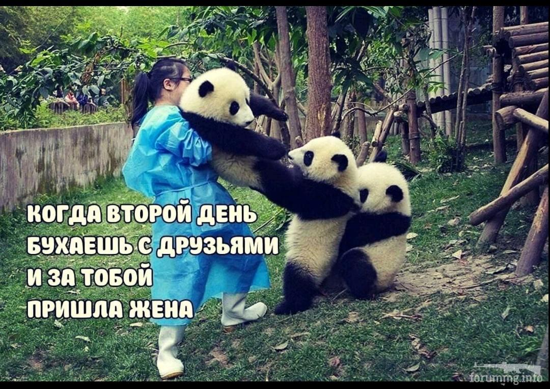 137257 - Пить или не пить? - пятничная алкогольная тема )))