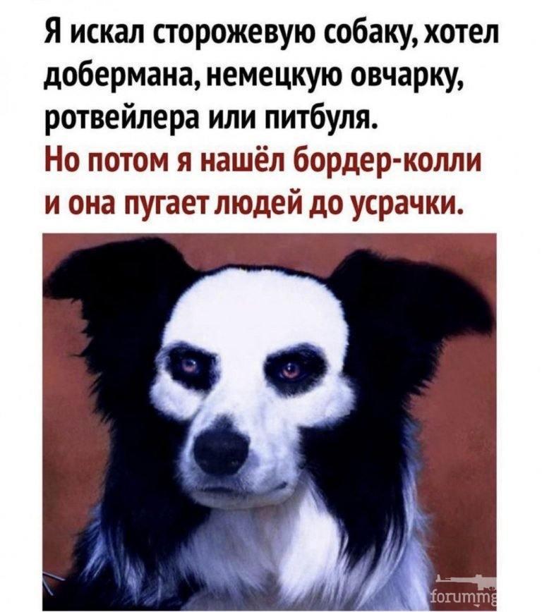 138955 - Смешные видео и фото с животными.