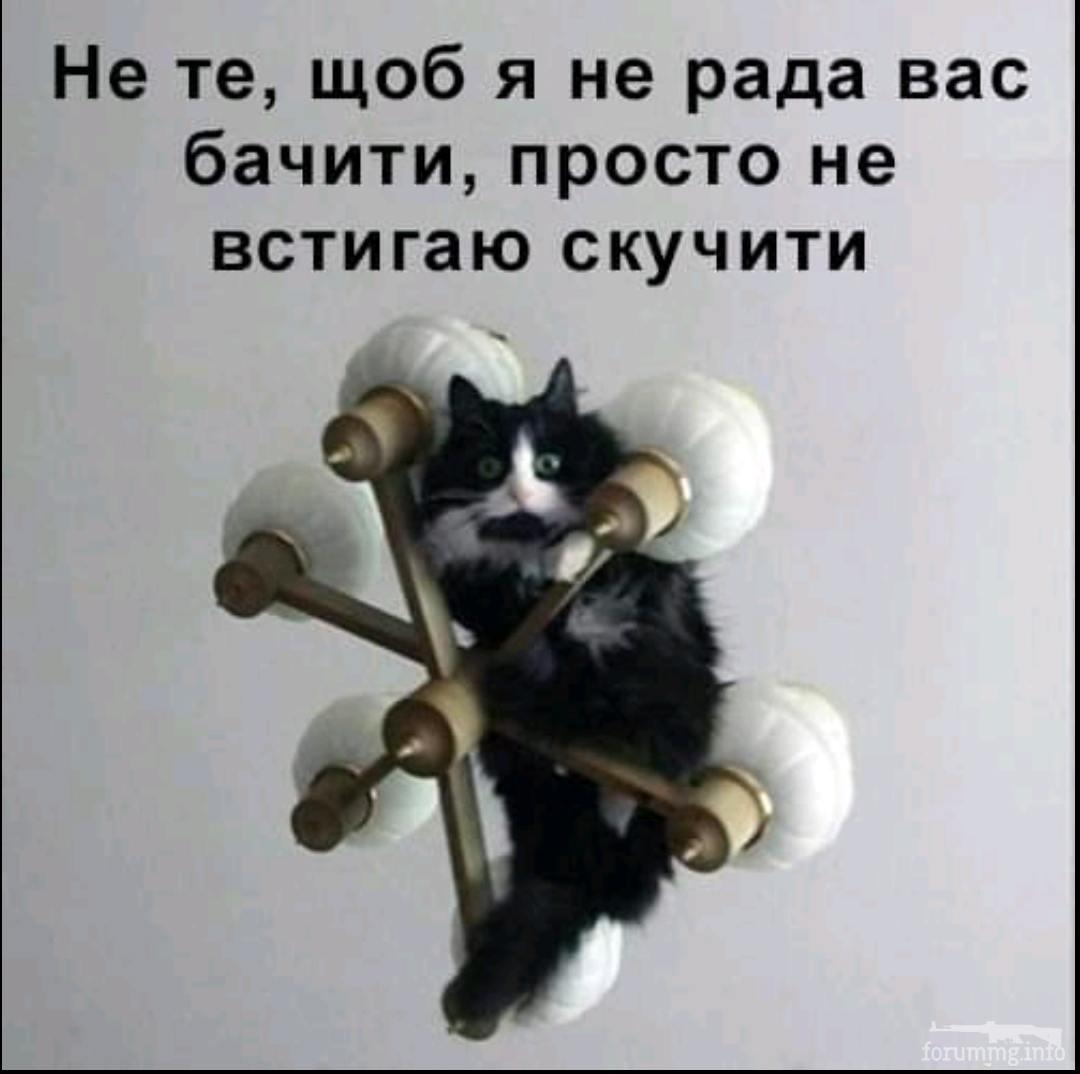 139548 - Смешные видео и фото с животными.