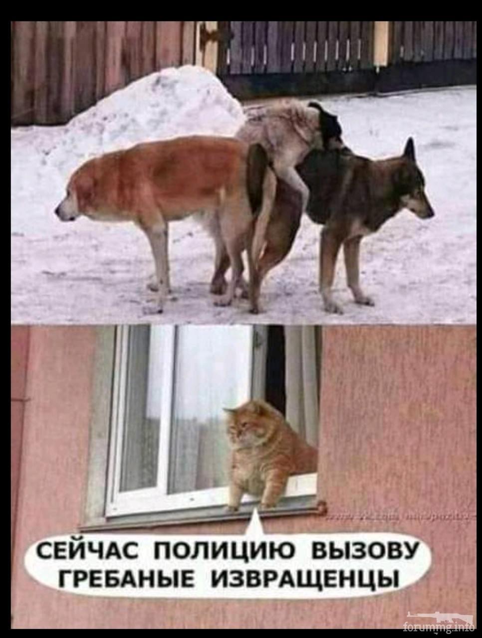 139840 - Смешные видео и фото с животными.