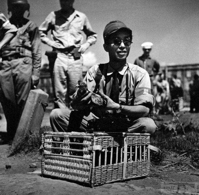 15813 - Военное фото 1941-1945 г.г. Тихий океан.