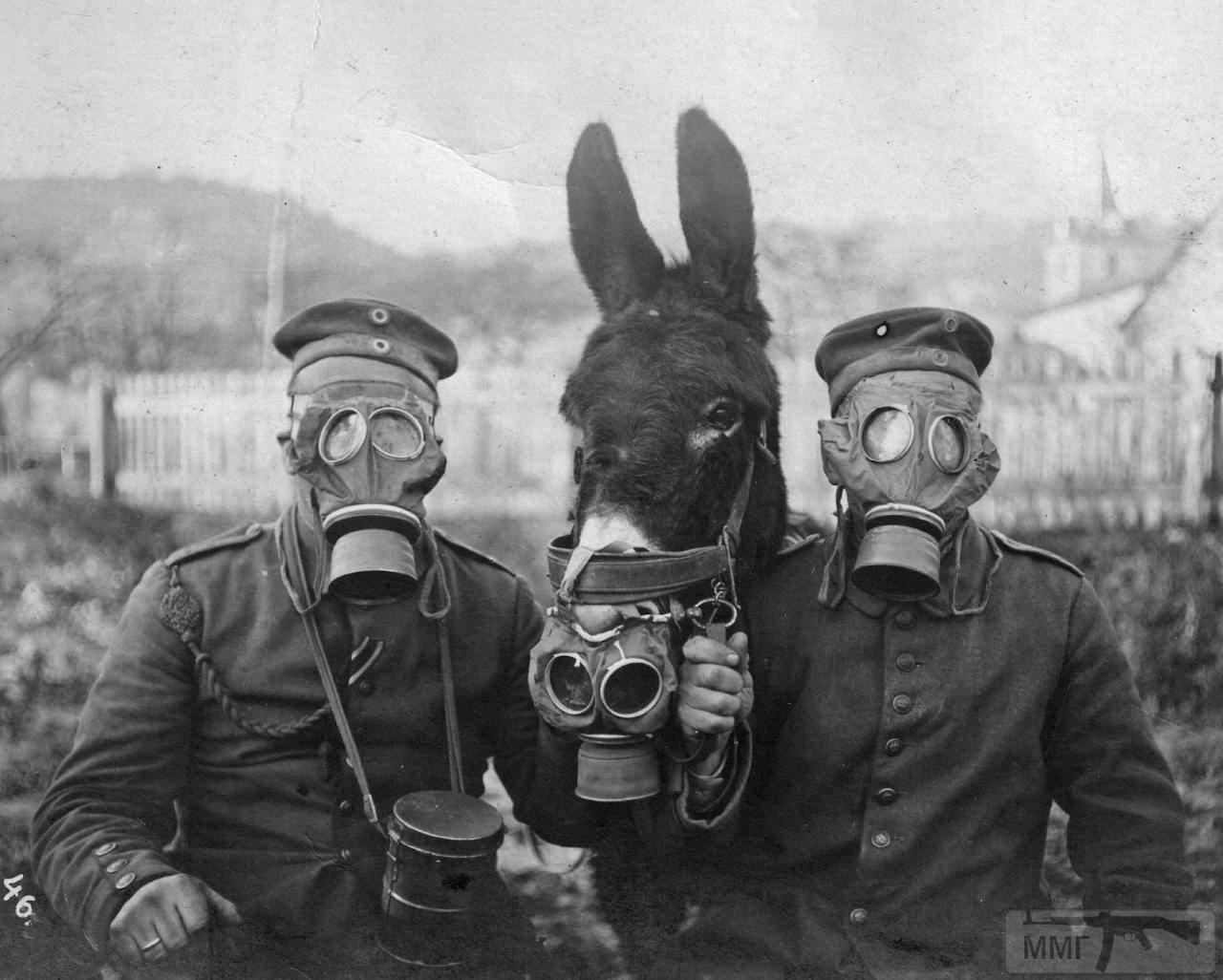 16506 - Военное фото. Западный фронт. 1914-1918г.г.