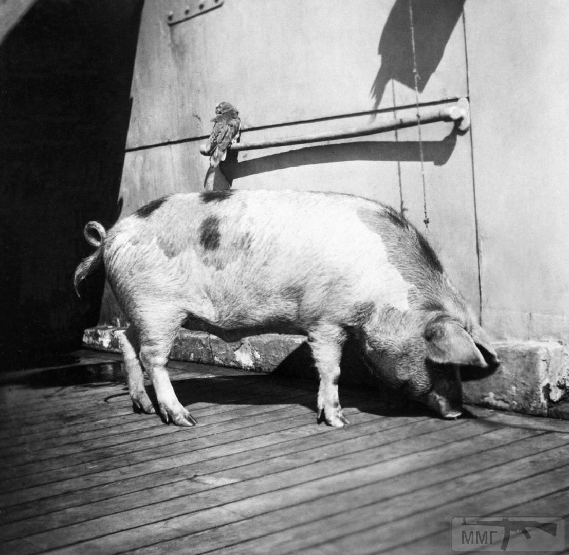 17978 - Животные на войне
