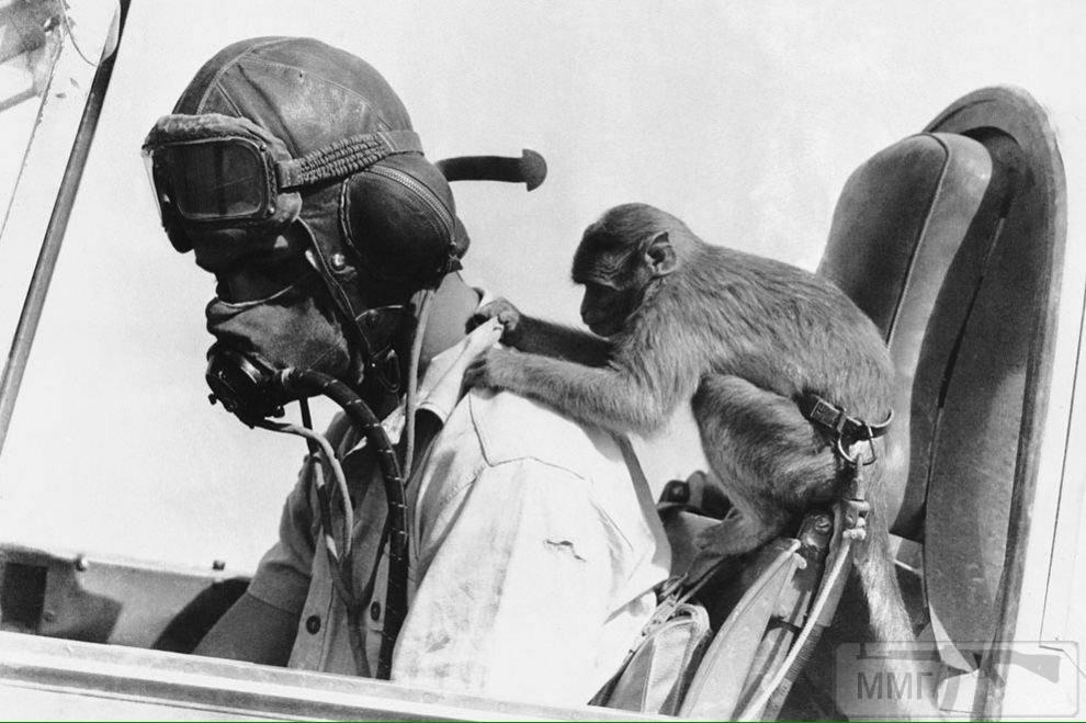 18158 - Военное фото 1939-1945 г.г. Западный фронт и Африка.