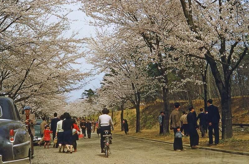 1913 - 25 по-настоящему безумных фактов о Японии