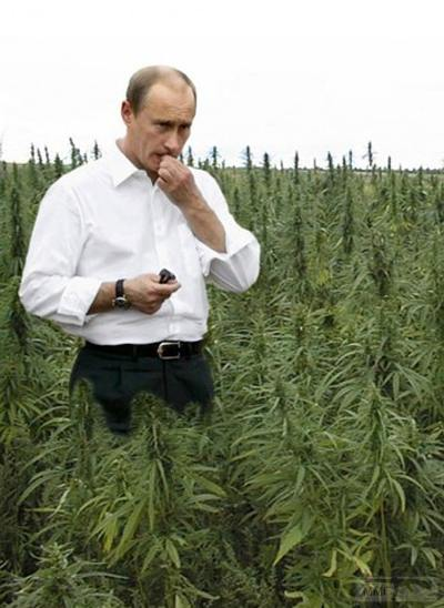 23257 - А в России чудеса!