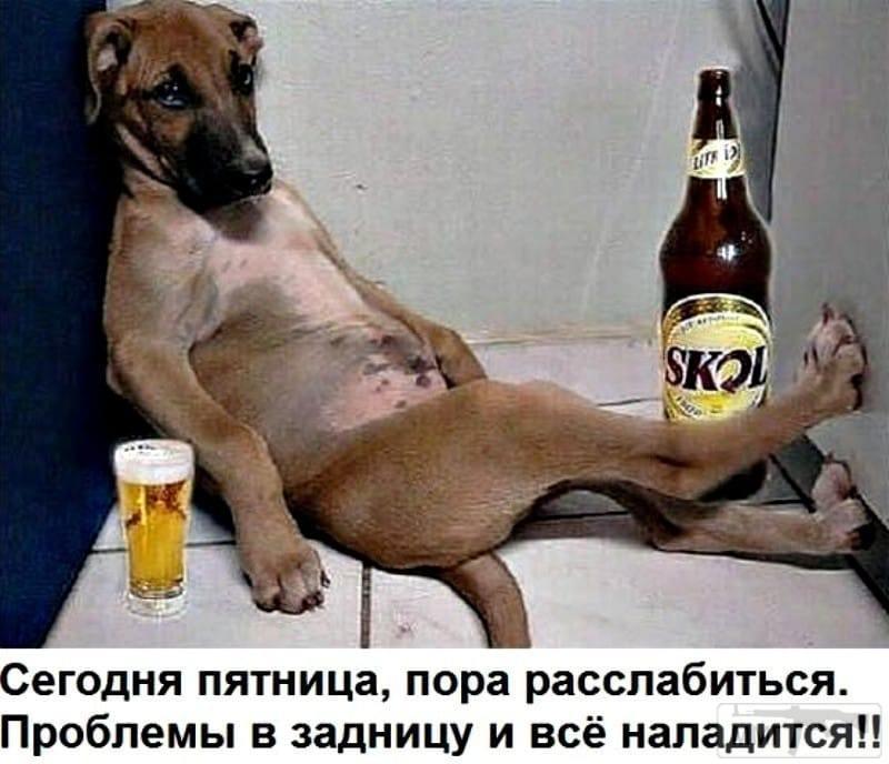 24080 - Пить или не пить? - пятничная алкогольная тема )))