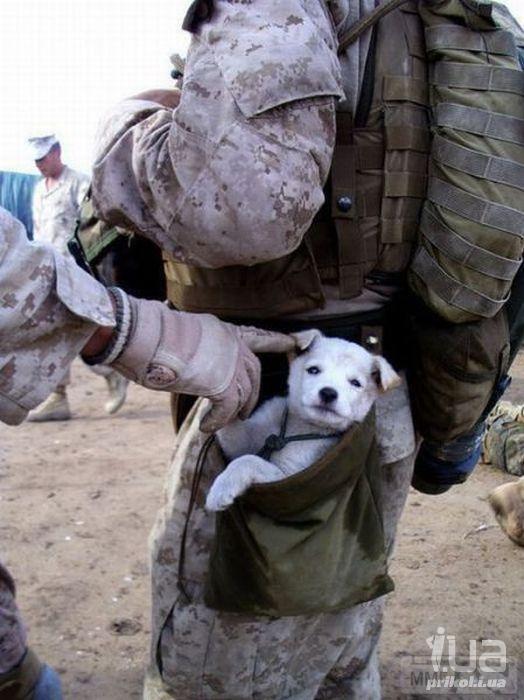30116 - Животные на войне