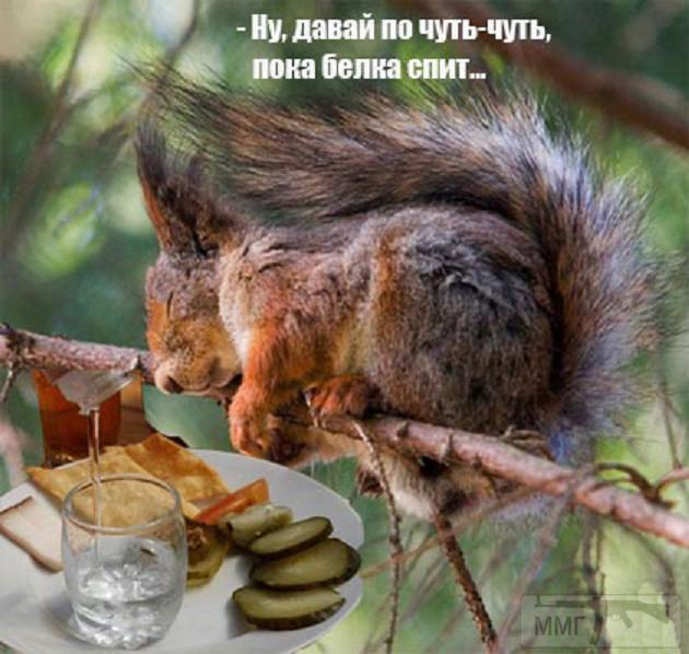 30863 - Пить или не пить? - пятничная алкогольная тема )))