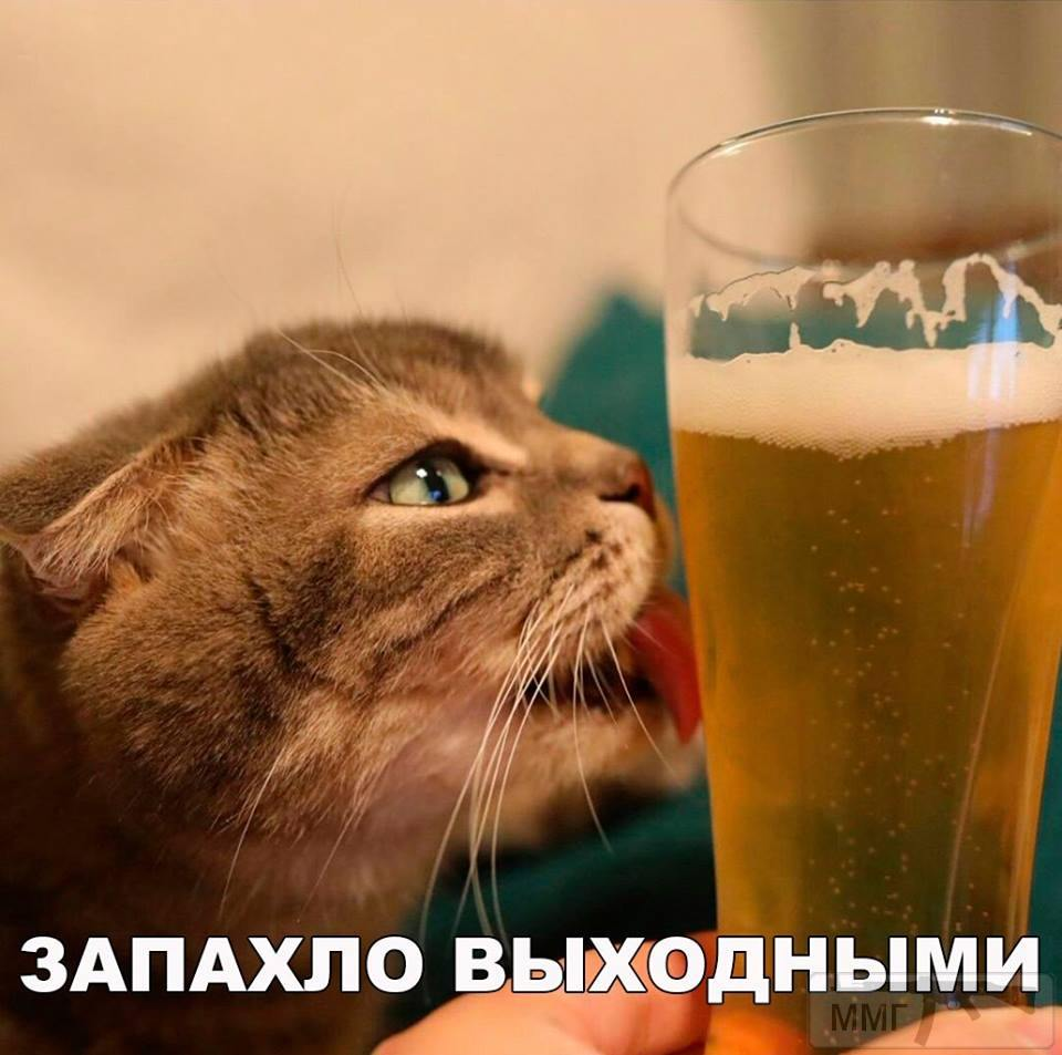 31095 - Пить или не пить? - пятничная алкогольная тема )))