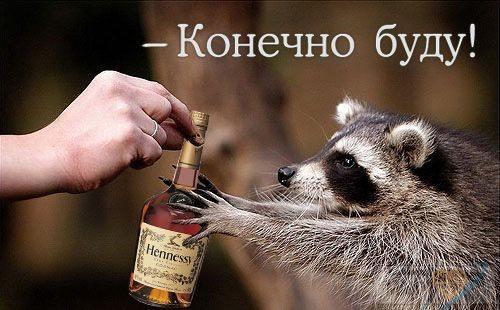 31286 - Пить или не пить? - пятничная алкогольная тема )))