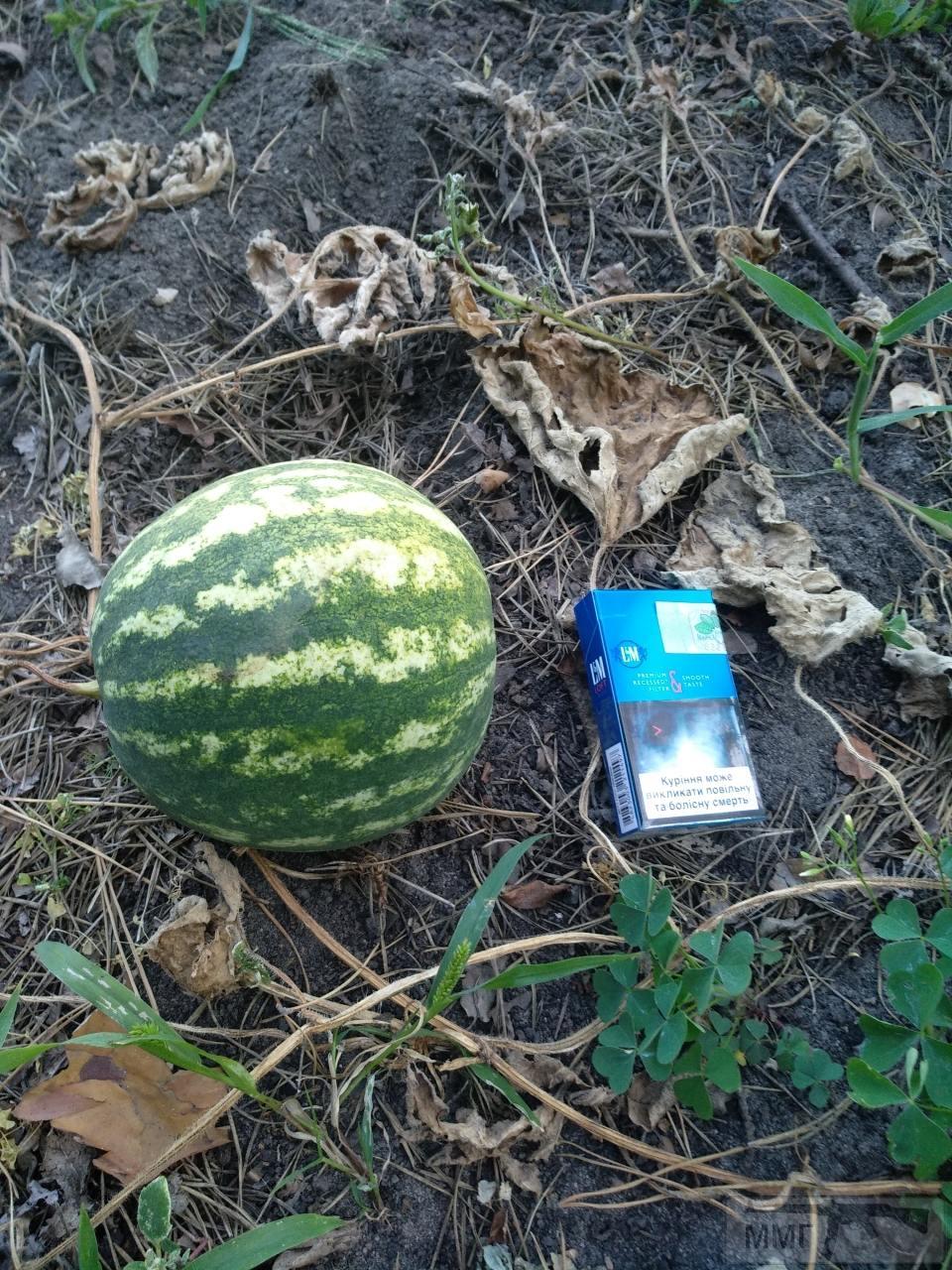33193 - Секреты садоводам и огородникам.