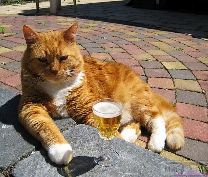 33702 - Пить или не пить? - пятничная алкогольная тема )))