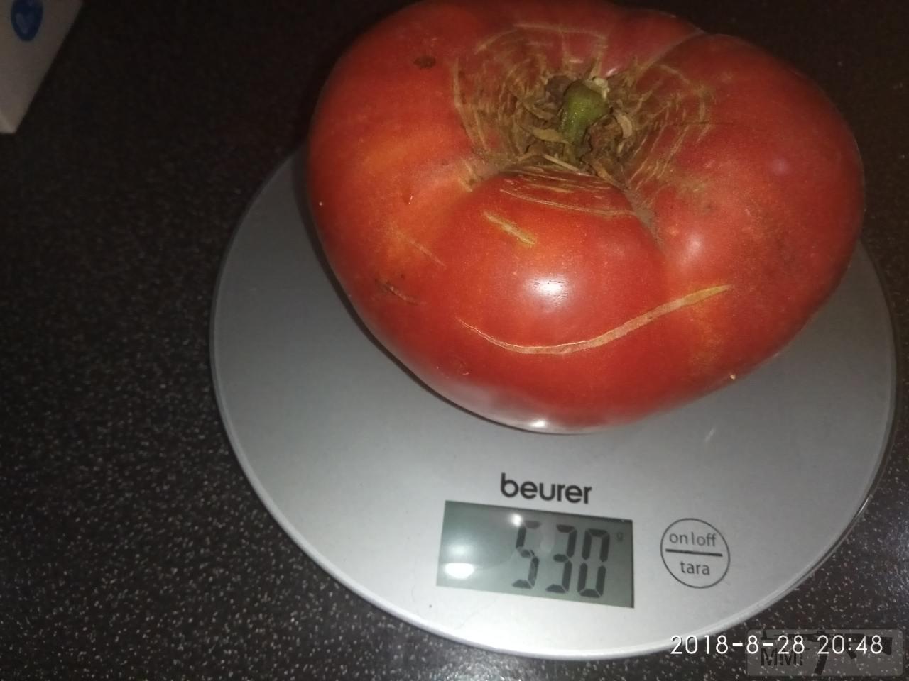 34488 - Вот такие помидоры из стеклянного парника