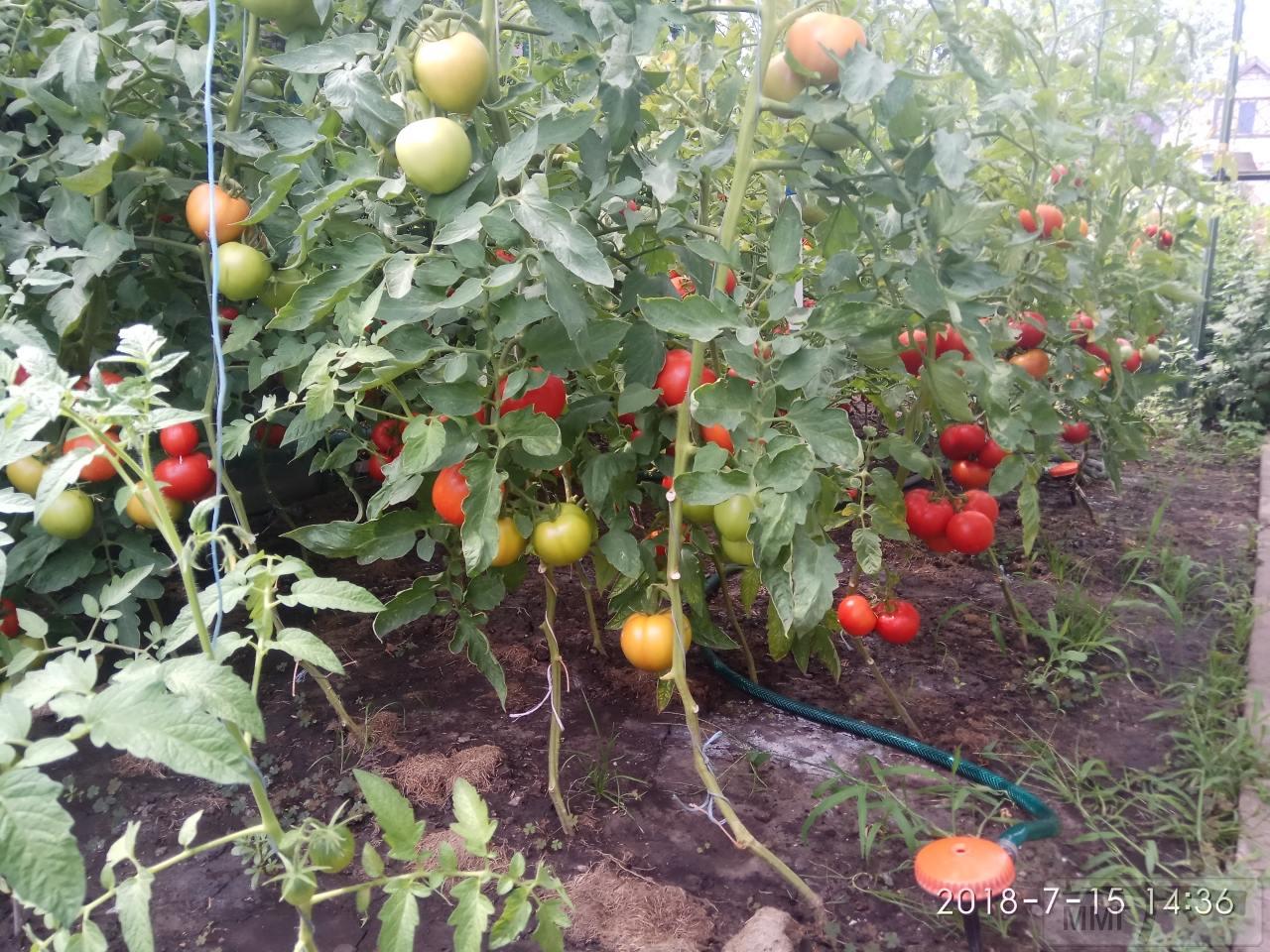 34489 - Секреты садоводам и огородникам.