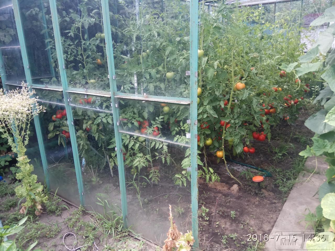 34490 - Секреты садоводам и огородникам.