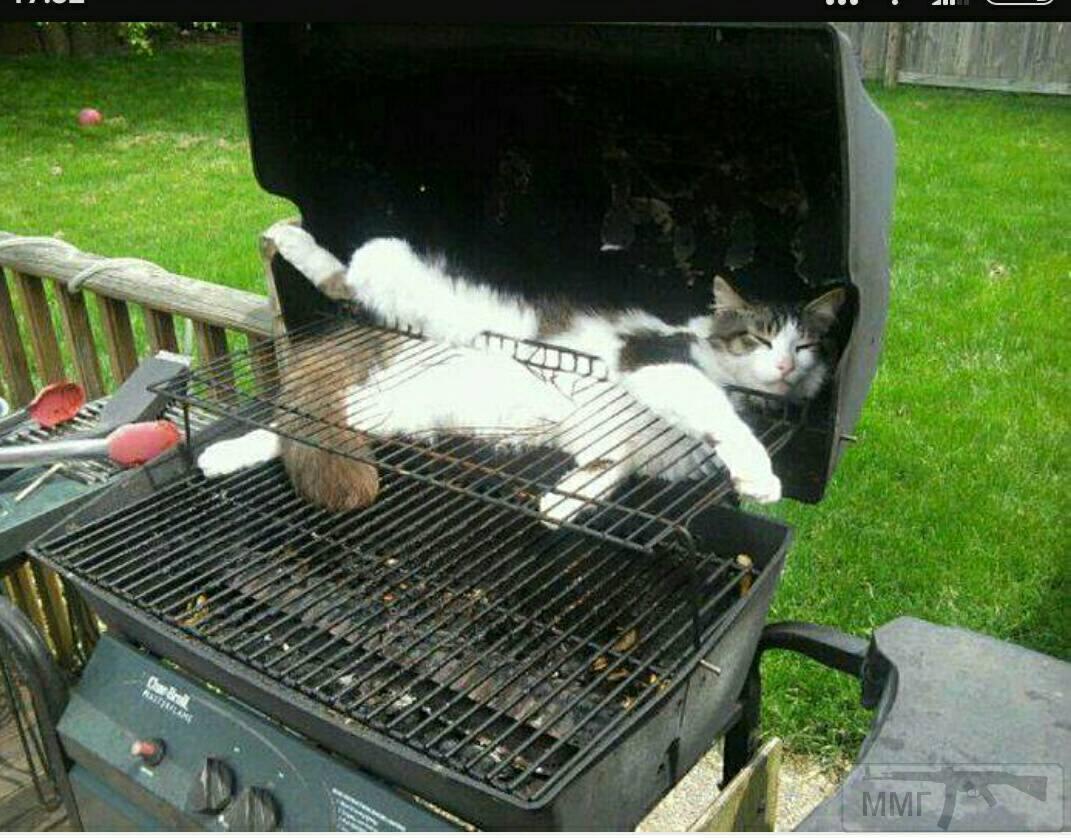 35397 - Закуски на огне (мангал, барбекю и т.д.) и кулинария вообще. Советы и рецепты.