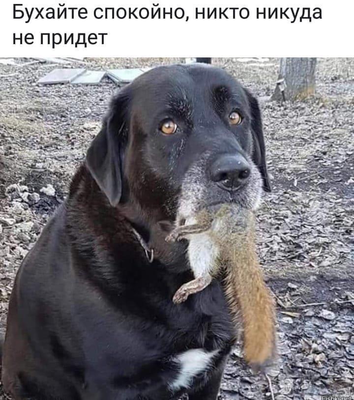 36029 - Пить или не пить? - пятничная алкогольная тема )))