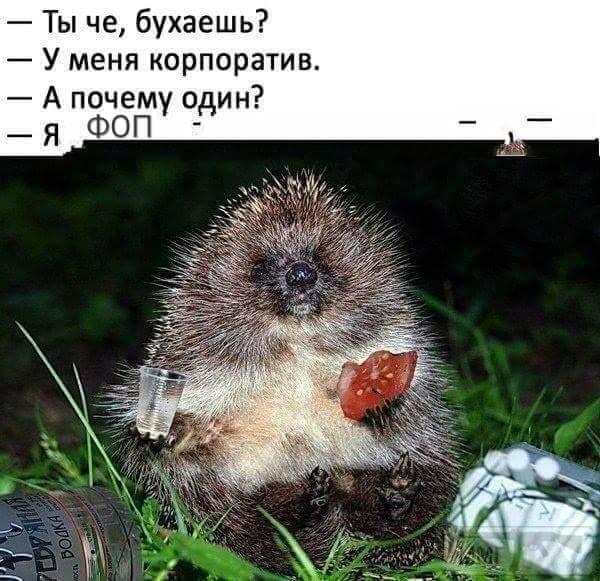 36644 - Пить или не пить? - пятничная алкогольная тема )))