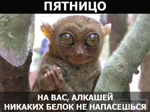 36854 - Пить или не пить? - пятничная алкогольная тема )))