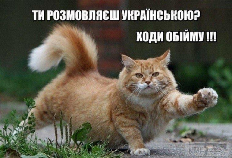 38088 - Украинцы и россияне,откуда ненависть.
