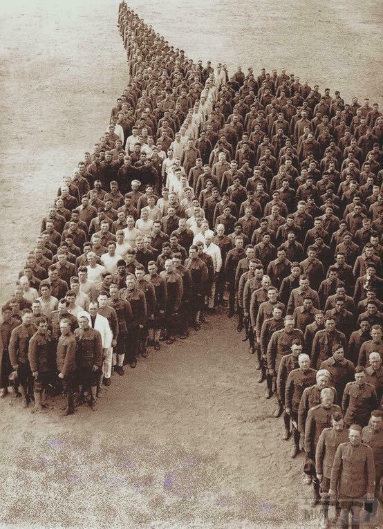 38635 - Животные на войне