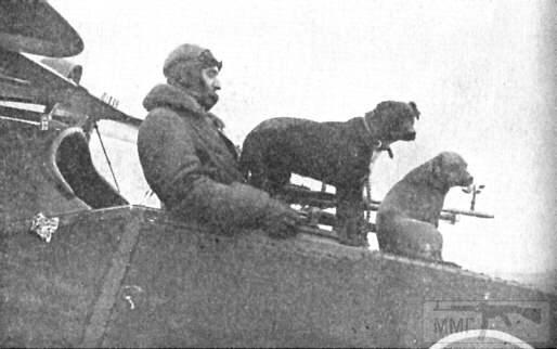 39117 - Животные на войне