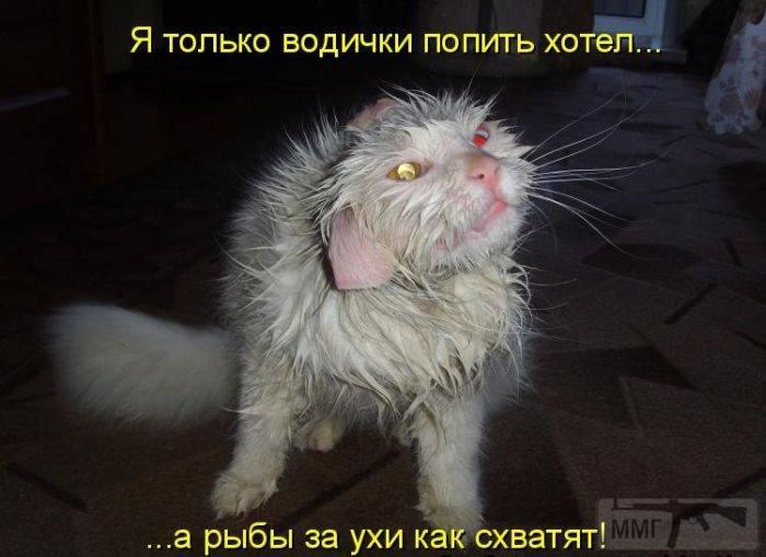 40569 - Смешные видео и фото с животными.