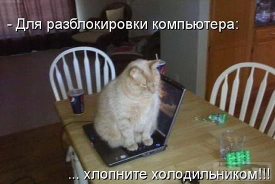 40572 - Смешные видео и фото с животными.