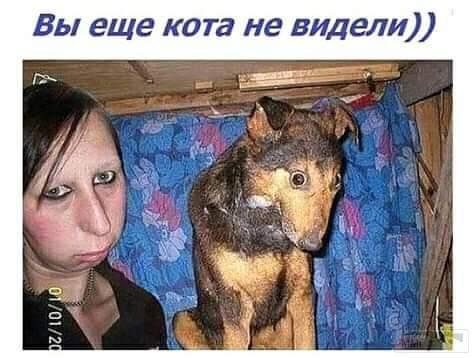 40642 - Смешные видео и фото с животными.