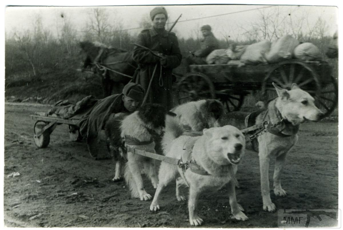 41393 - Животные на войне