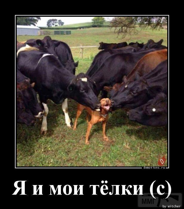 41454 - Смешные видео и фото с животными.