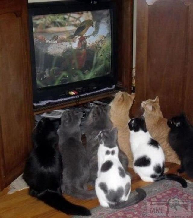 41468 - Смешные видео и фото с животными.