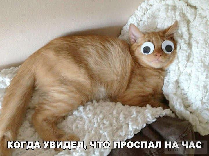 41521 - Смешные видео и фото с животными.