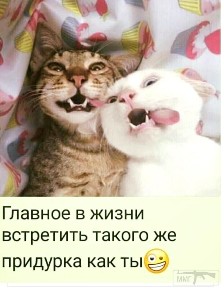 41567 - Смешные видео и фото с животными.