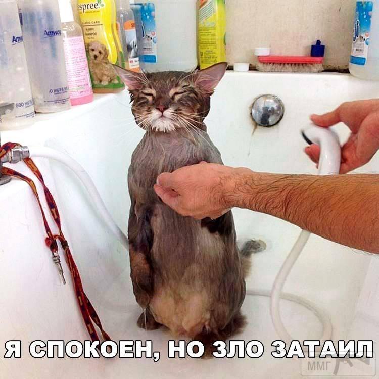 41853 - Смешные видео и фото с животными.