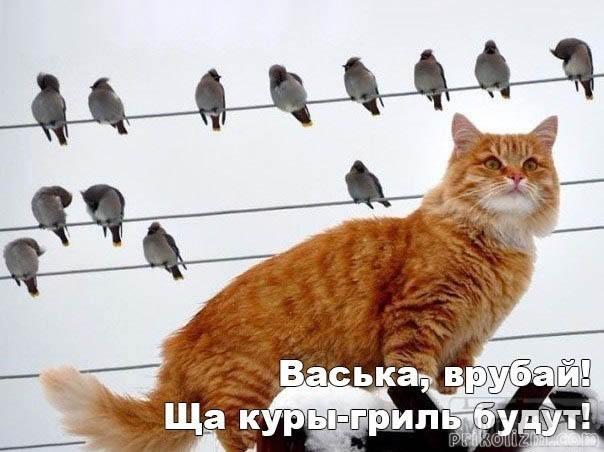 41887 - Смешные видео и фото с животными.