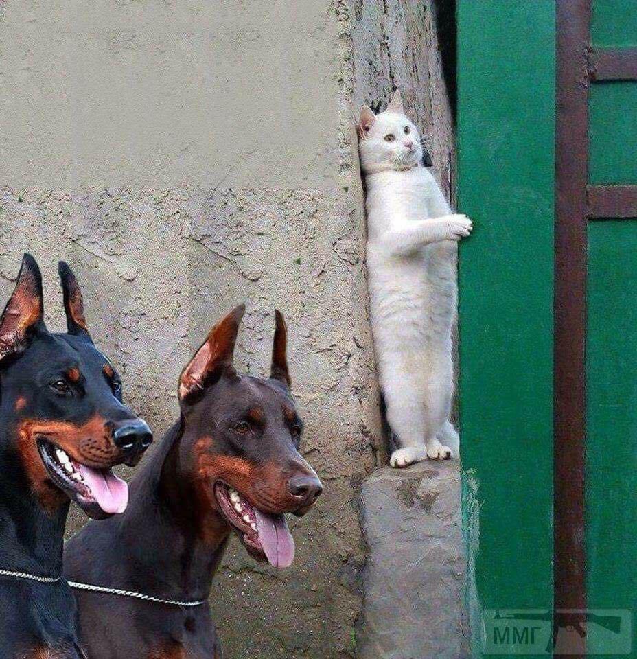 42894 - Смешные видео и фото с животными.