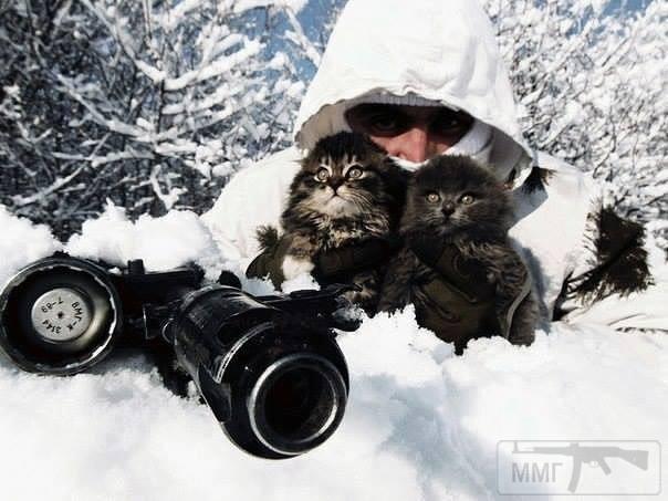 43189 - Смешные видео и фото с животными.